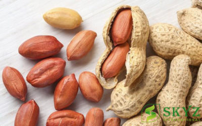 Peanuts Exporters in India - SKYZ INTERNATIONAL