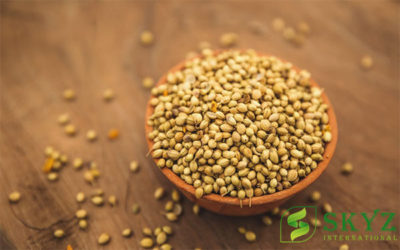 Coriander Seeds Exporter in India - SKYZ International - Quality Agricultural Product Exporter