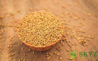 Fenugreek Seeds Exporter from India - SKYZ International - Quality Agricultural Product Exporter