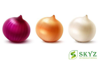 Onion Exporters in India